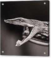 Vine Snake Acrylic Print