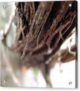Vines 006 Acrylic Print