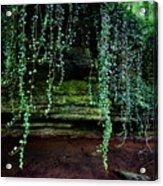 Vines Flow Over Creek Acrylic Print
