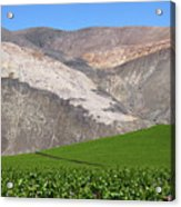 Vineyards In The Atacama Desert Chile Acrylic Print