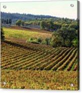 Vineyard 22 Acrylic Print