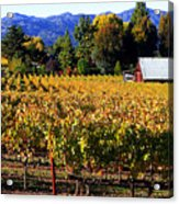 Vineyard 4 Acrylic Print