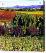 Vineyard 5 Acrylic Print