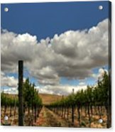 Vineyard Acrylic Print
