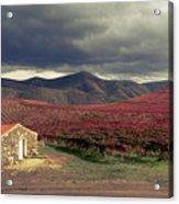 Vineyard House Acrylic Print