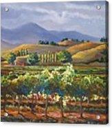 Vineyard In California Acrylic Print