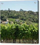 Vineyard In Sebastopol, Sonoma, California Acrylic Print
