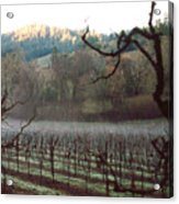 Vineyard In The Winter Acrylic Print