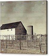 Vineyard In Winter Acrylic Print