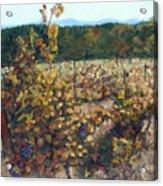Vineyard Lucchesi Acrylic Print