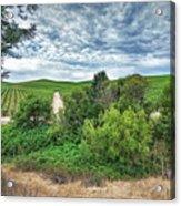 Vineyard On Cloudy Day Acrylic Print