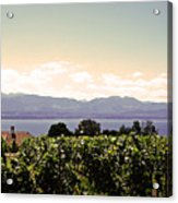 Vineyard On Lake Geneva Acrylic Print