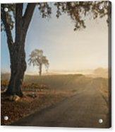Vineyard Road Acrylic Print