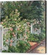 Vineyard Roses Acrylic Print