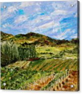 Vineyard Solitude Acrylic Print