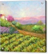 Vineyard Spring Acrylic Print