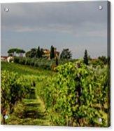 Vineyard View Acrylic Print