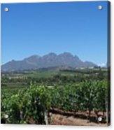 Vineyards Cape Town Acrylic Print