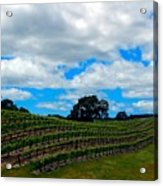 Vineyards In Paso Robles Acrylic Print