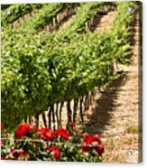 Vineyards In The Galilee  4 Acrylic Print