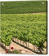 Vineyards In The Galilee Acrylic Print