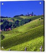 Vineyards Of Jerusalem Slovenia Acrylic Print