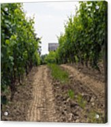 Vineyards Of Old Color Acrylic Print