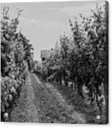 Vineyards Of Old Horizontal Bw Acrylic Print