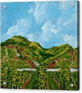 Vineyards Of The Wachau Valley Acrylic Print