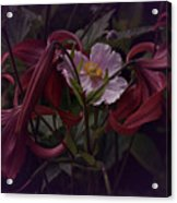Vintage Asiatic Lilies  Acrylic Print