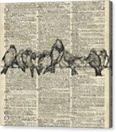 Vintage Birds Dictionary Art Acrylic Print