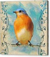 Vintage Bluebird With Flourishes Acrylic Print