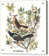 Vintage Boat-tailed Grackles Audubon Acrylic Print