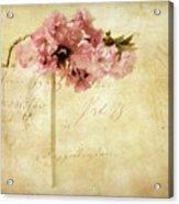 Vintage Cherry Acrylic Print