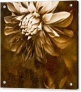 Vintage Dahlia Acrylic Print