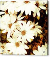 Vintage Daisies Acrylic Print by Denice Breaux