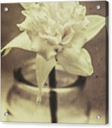 Vintage Floral Still Life Of A Pure White Bloom Acrylic Print