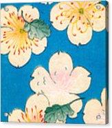 Vintage Japanese Illustration Of Dogwood Blossoms Acrylic Print