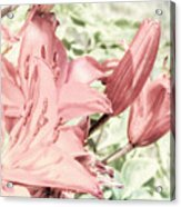 Vintage Lilly Delight Acrylic Print
