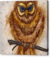 Vintage Owl Acrylic Print