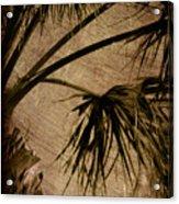 Vintage Palm Acrylic Print