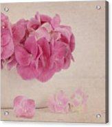 Vintage Pink Hydrangea Acrylic Print