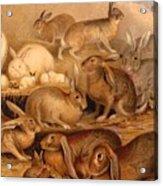 Vintage Rabbit Hutch Acrylic Print