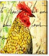 Vintage Rooster Portrait    Acrylic Print
