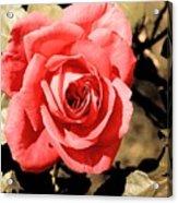 Vintage Rose 02 Acrylic Print