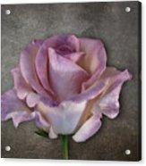 Vintage Rose On Gray Acrylic Print
