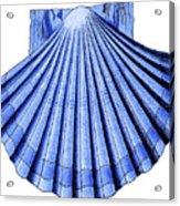 Vintage Scallop Shell Blue Acrylic Print