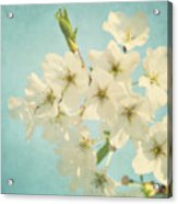Vintage Spring Blossoms Acrylic Print