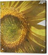 Vintage Sunflower Acrylic Print