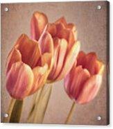 Vintage Tulips Acrylic Print